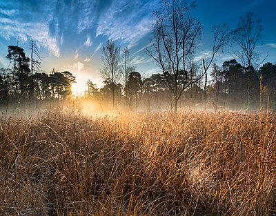 Dawn light over Strensall Common Lowland Heath, Nature Reserve, near York, North Yorkshire, England, United Kingdom - p871m2074891 by John Potter