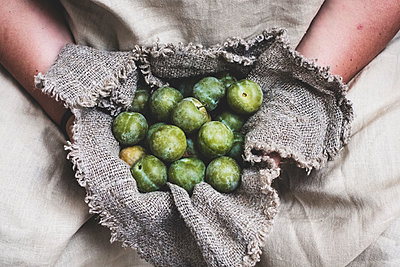 Close up of person holding fresh greengages in grey cloth. - p1100m2084887 by Mint Images