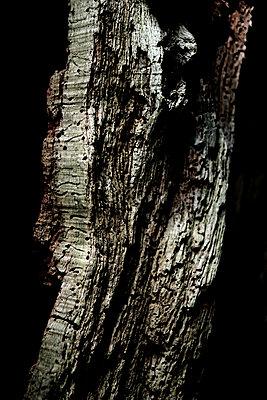 Rotten tree trunk - p1221m1165519 by Frank Lothar Lange