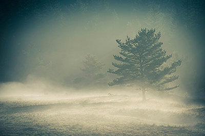 Snow storm - p829m949331 by Régis Domergue