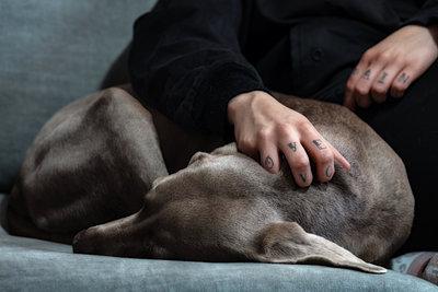 Frau und Weimaraner auf dem Sofa - p1168m1525810 von Thomas Günther
