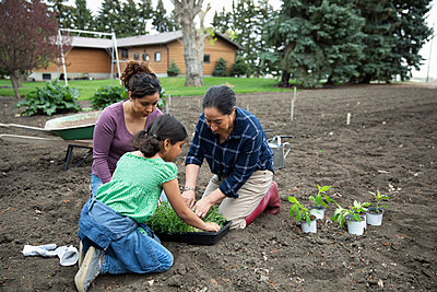 Multi-generation women gardening, planting vegetables and herbs in garden - p1192m2109641 by Hero Images