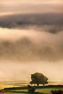 Thick mist hangs in a valley near Bwlch on a summers morning, Brecon Beacons National Park, Powys, Wales, United Kingdom, Europe - p871m711383 by Adam Burton