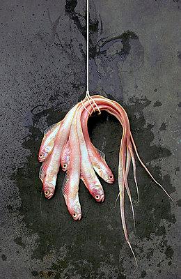Zusammengebundene Fische - p8860042 von Francois Bour