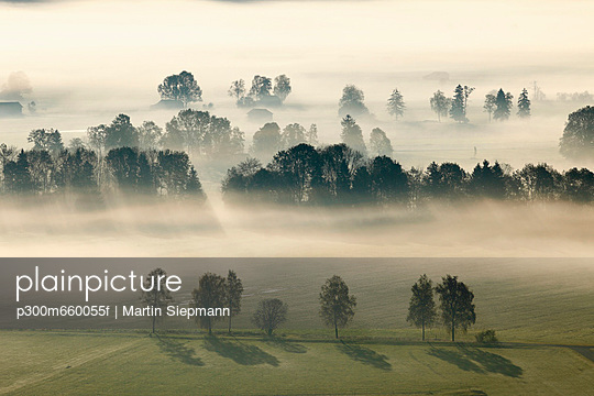 View of tree in fog - p300m660055f by Martin Siepmann