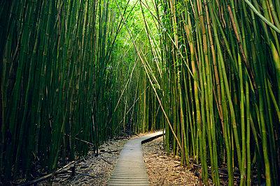USA, Hawaii, Maui, Haleakala National Park, bamboo forest at Pipiwai Trail - p300m1018830f by Biederbick&Rumpf