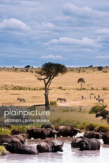 Kenia - p5330421 von Böhm Monika