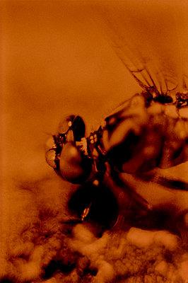 Dragonfly - p1028m2044065 von Jean Marmeisse