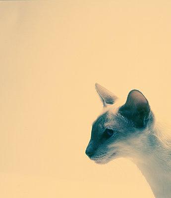 Kopf einer Katze vor hellem Hintergrund - p1082m2196358 von Daniel Allan