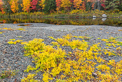 Fall colors line the banks of the East Branch of the Penobscot River - p1166m2094336 by Cavan Images