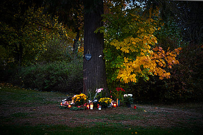 Urn grave, Friedwald, tree and lit candles on All Saints - p1312m2193645 by Axel Killian