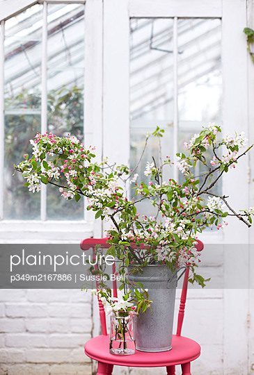 Metal bucket with branches of blossom and glass jar with spring flowers on bright pink chair in greenhouse - p349m2167886 by Sussie Bell