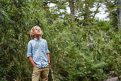 Chile, Puren, Nahuelbuta National Park, boy standing in bamboo forest looking up - p300m2069308 by Stefan Schütz