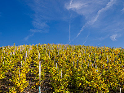 Vineyard - p885m865634 by Oliver Brenneisen