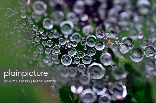 Drops of dew - p378m1002086 by Nisha Keshav