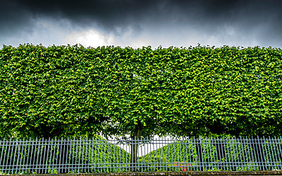 Hedge bordering property - p813m1154685 by B.Jaubert