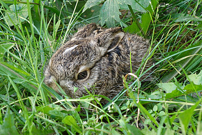 Little hare - p1016m934785 by Jochen Knobloch