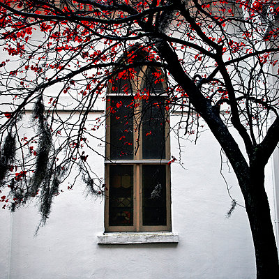 Red leaves and church window. - p1072m1056628 by Joseph Shields