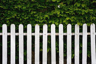 Weißer Lattenzaun vor einer Hecke - p1578m2284433 von Marcus Hammerschmitt