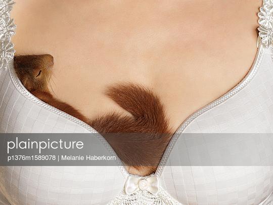 Schlafendes Eichhörnchen im BH - p1376m1589078 von Melanie Haberkorn
