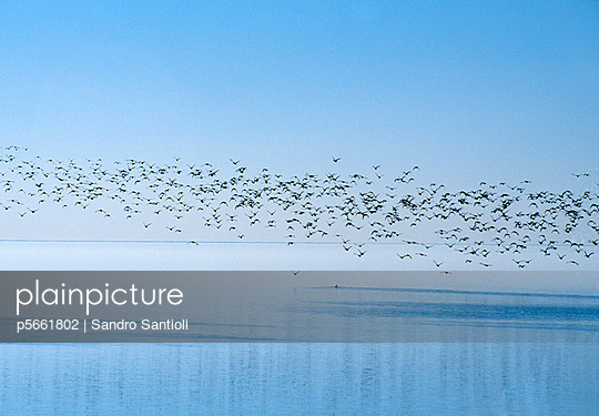 Landscape with flying birds