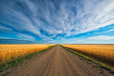 A gravel road that heads through Canada's prairies in rural Saskatchewan; Val Marie, Saskatchewan, Canada - p442m1449107 by Robert Postma