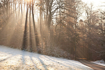 A cold day in winter with sunlight - p533m1474792 by Böhm Monika