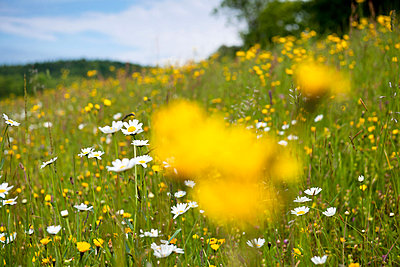 Flower meadow - p533m908635 by Böhm Monika