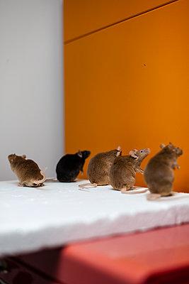 Padded mice - p795m2222965 by JanJasperKlein