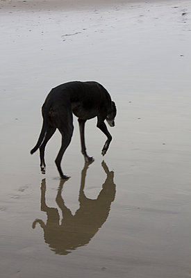 Lone dog - p1121m1072248 by Gail Symes