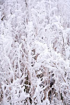 Winter - p2686961 von Christof Mattes