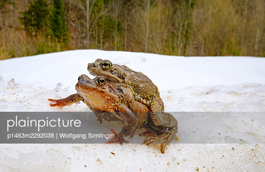 Agile frogs - p1463m2292038 by Wolfgang Simlinger