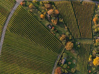 Full frame shot of vineyards in landscape during autumn, Stuttgart, Baden-Wuerttemberg, Germany - p301m1406263 by Stephan Zirwes