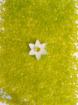 High angle view of a Daffodil flower - p3484141 by Per Sihlberg