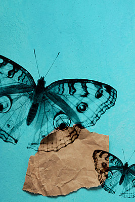 Silhouettes of butterflies - p450m2211062 by Hanka Steidle