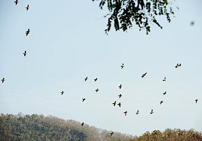 Vogelschwarm - p1229m1539591 von noa-mar
