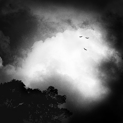 Cloudy sky with birds - p1240m2063321 by Adeline Spengler