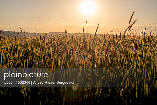 p555m1532344 von Aliyev Alexei Sergeevich
