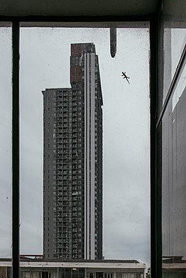 Thailand, Gecko on skyscraper window - p728m2219745 by Peter Nitsch