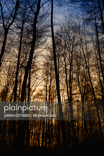 Sunset in the forest - p999m2275850 by Monika Kluza