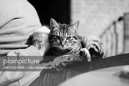 calin felin  - p987m2218996 by Célia Swaenepoel