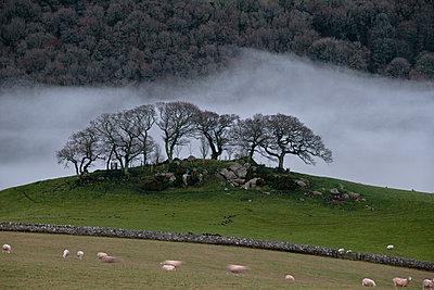 Whafts of mist - p1057m908343 by Stephen Shepherd