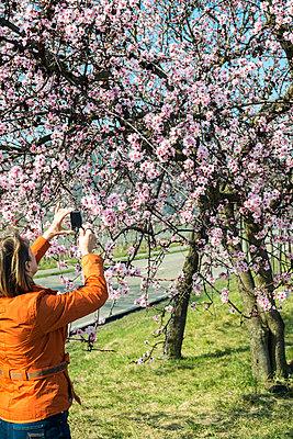 Mandelblütenfotografin - p1164m1034855 von Uwe Schinkel