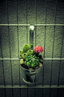 Kakteen im Blumentopf - p248m2223961 von BY