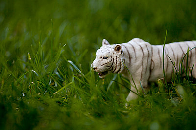 White tiger - p4451372 by Marie Docher