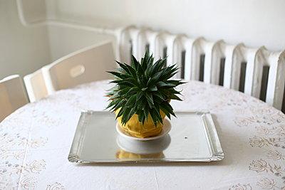 Grünpflanze - p1063m2045322 von Ekaterina Vasilyeva