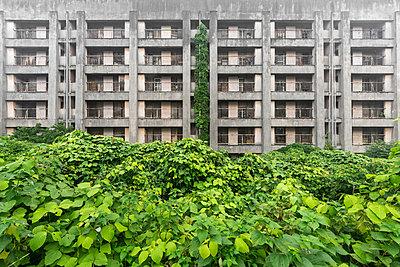 Deserted building, overgrown garden, Japan - p1440m2210808 by terence abela