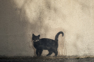 Street cat - p927m1445755 by Florence Delahaye