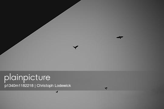 Vier Vögel - p1340m1182218 von Christoph Lodewick