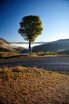 Baum - p8290244 von Régis Domergue